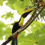 Le Costa Rica, un pays qui fascine les écotouristes du monde entier