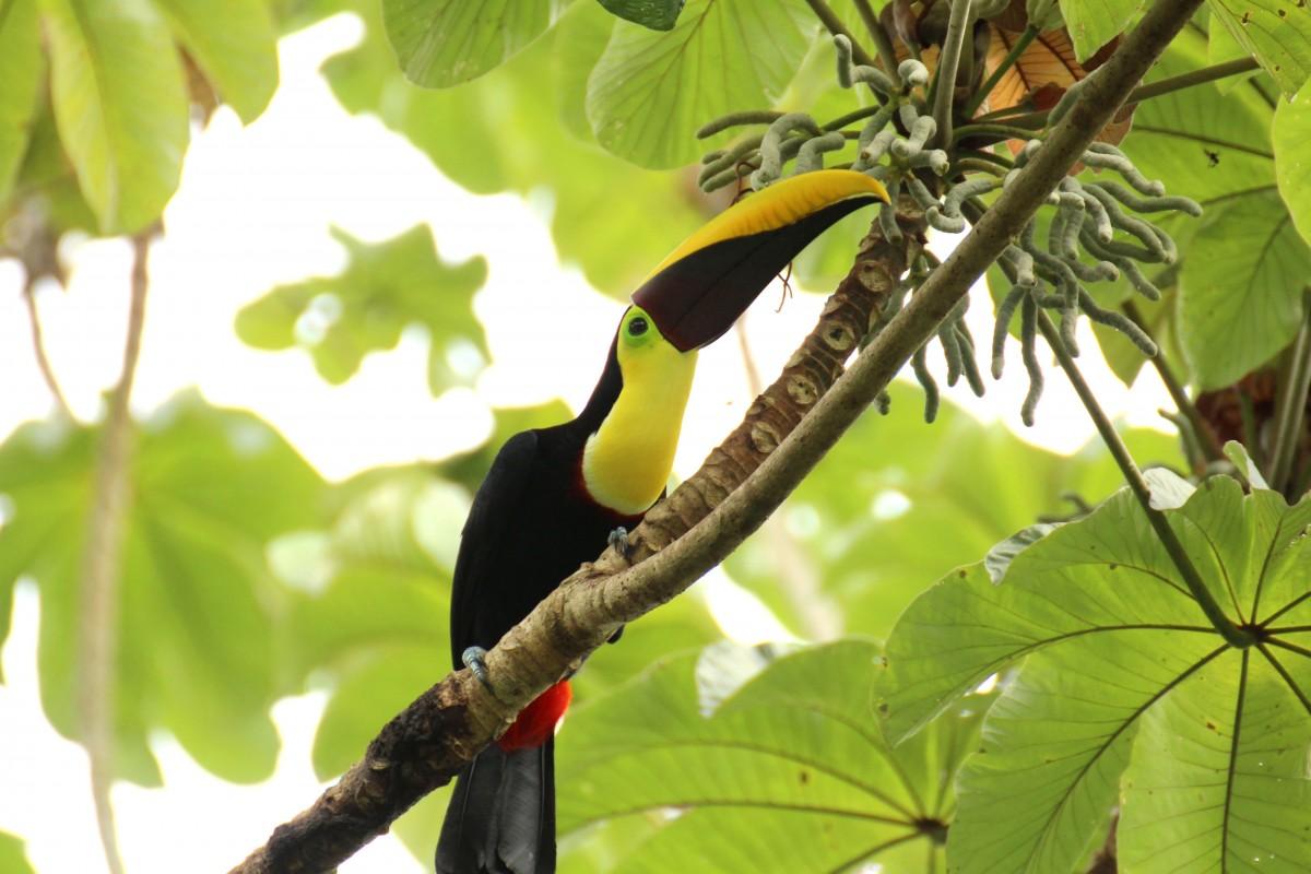 Un parc au Costa Rica