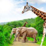 Direction l'Afrique du Sud, une contrée de rêve pour partir à l'aventure
