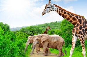 Les animaux d'Afrique du Sud